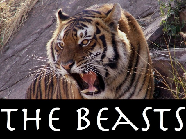 The Beasts Tiger_10