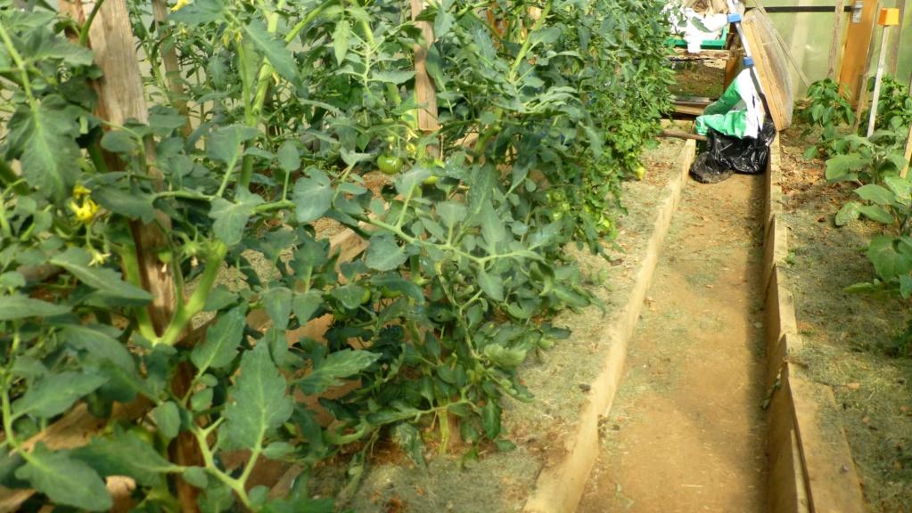 Le potager  et les fleurs  aujourd'hui P1150414