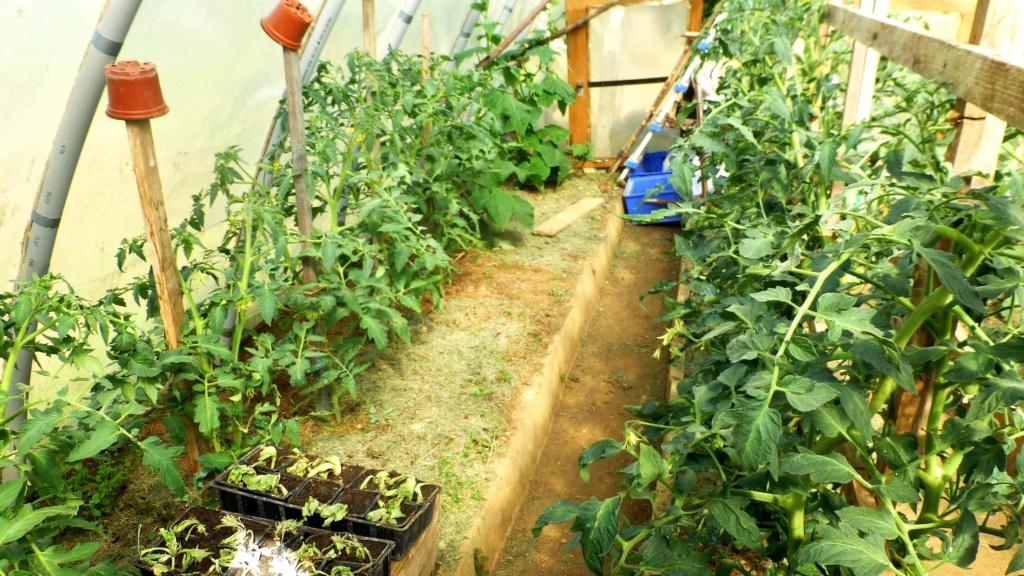 Le potager  et les fleurs  aujourd'hui P1150415