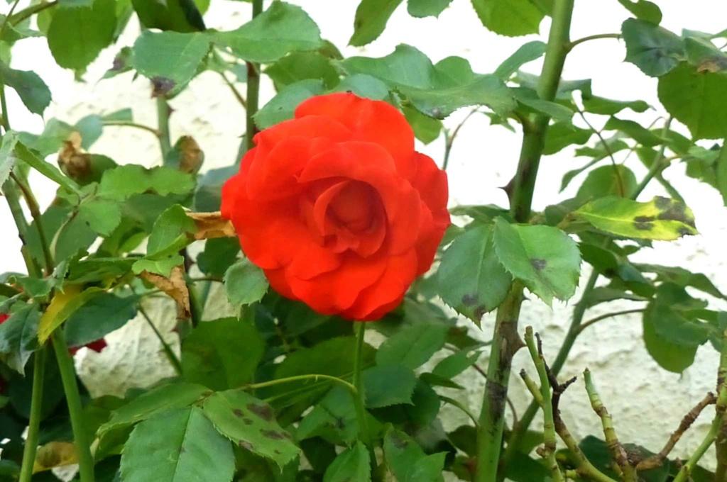 Le potager  et les fleurs  aujourd'hui P1150419