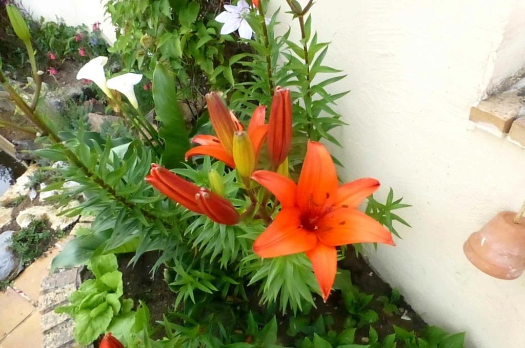 Le potager  et les fleurs  aujourd'hui P1150421