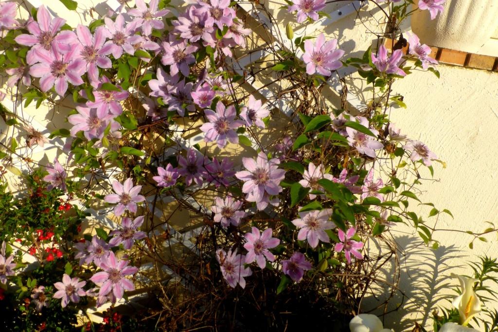 Mon beau jardin P1160810