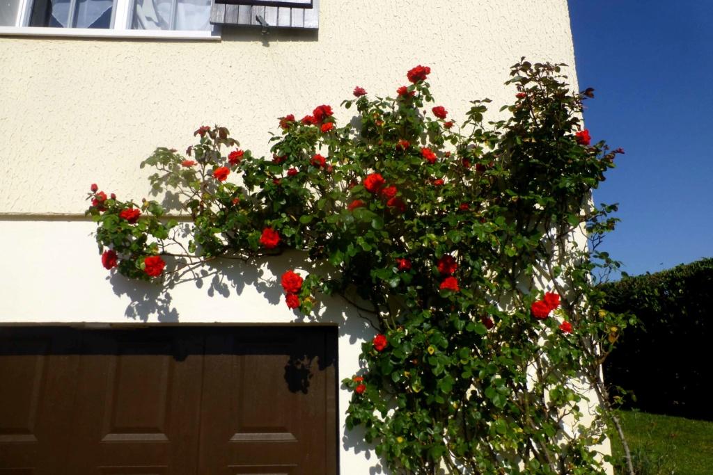 Mon beau jardin P1160813