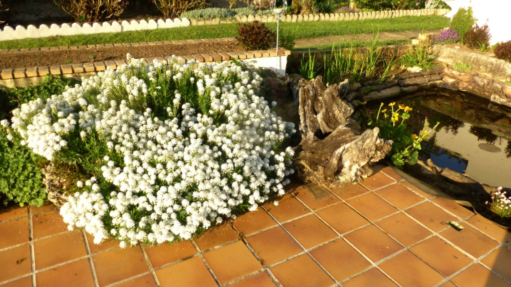 Mon beau jardin P1160814