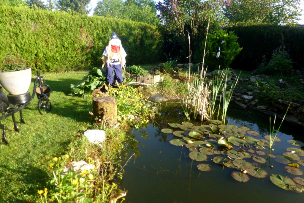 Mon beau jardin P1160816