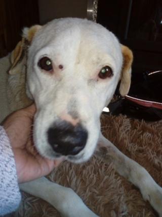 ALBA, F-X, née 2012, 18 kg - Gentille, démonstrative -(BELLA) Prise en charge Association AVRAH - Page 3 Alba113