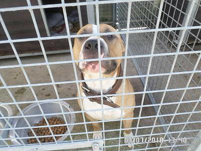 Jeune chien de 1 an et 7 mois en fourrière va mourrir demain, vite une solution Smile10