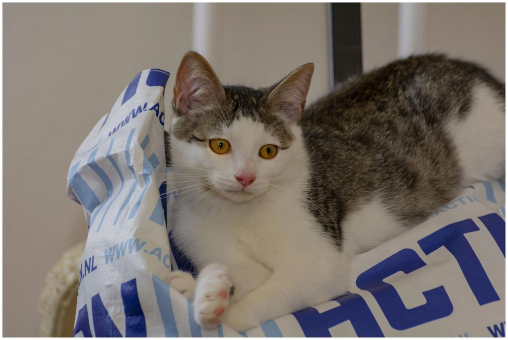 MILO, chaton mâle beige et gris né le 07/04/18 00610