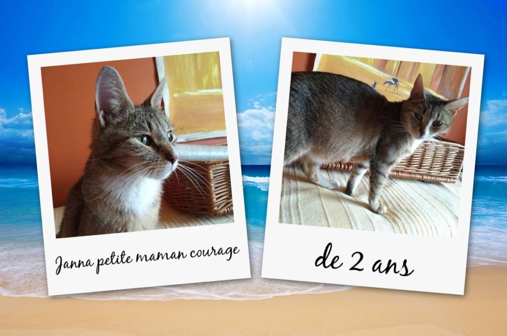 JANNA, belle chatte tigrée de 2 ans Pixiz-11