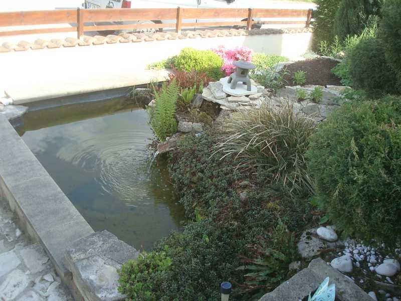 Les bassins Dsc00810
