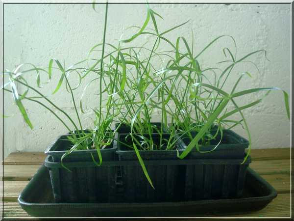Une plante qui aime l'eau  Dsc02090