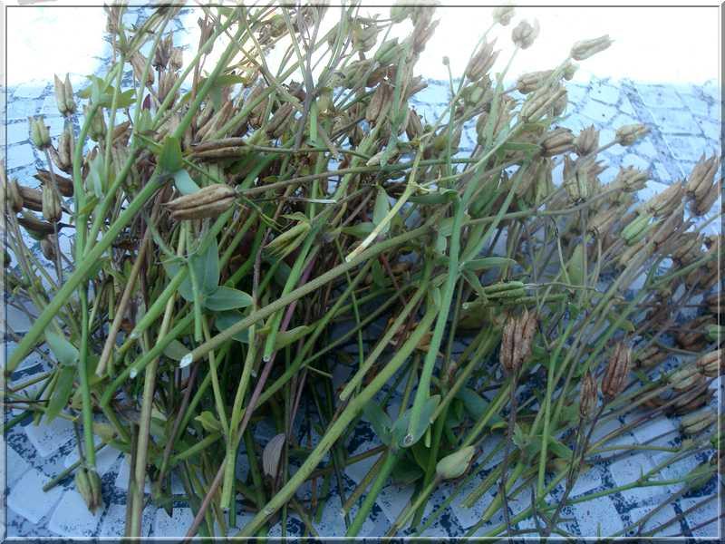 Les graines... la récolte ! Dsc02381