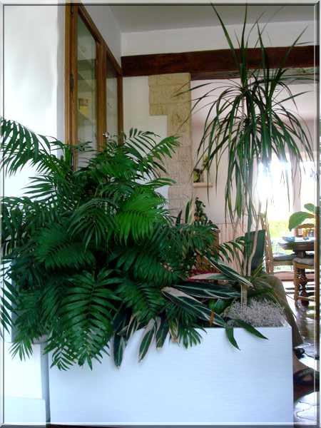 Les plantes d'intérieur chez camélia Dsc02425