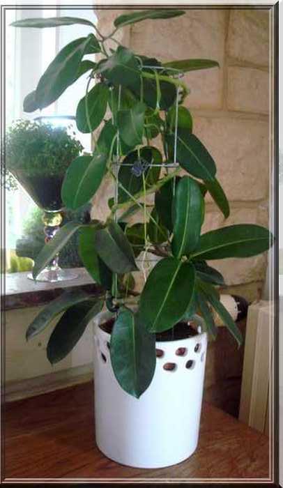 Les plantes d'intérieur chez camélia Dsc02427