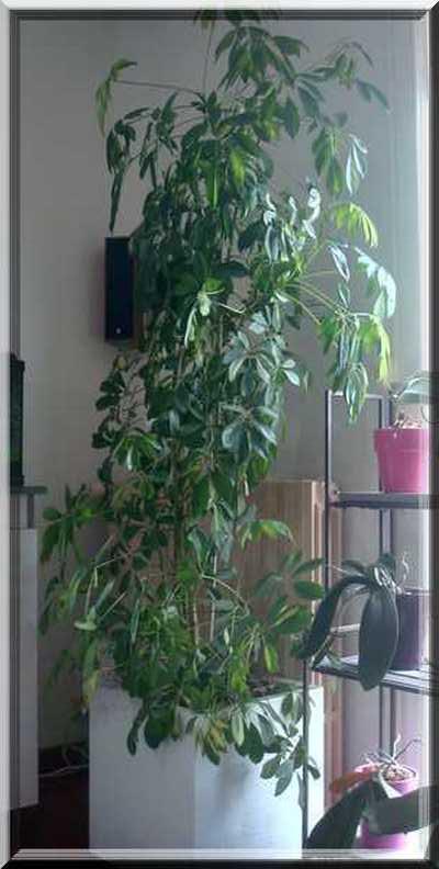 Les plantes d'intérieur chez camélia Dsc02430