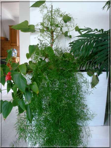 Les plantes d'intérieur chez camélia Dsc02431
