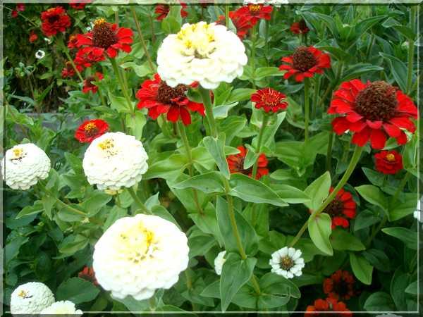Le jardin des couleurs Dsc03027