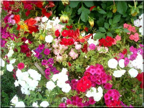 Le jardin des couleurs Dsc03029
