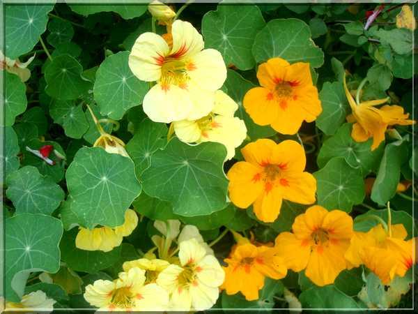 Le jardin des couleurs Dsc03030