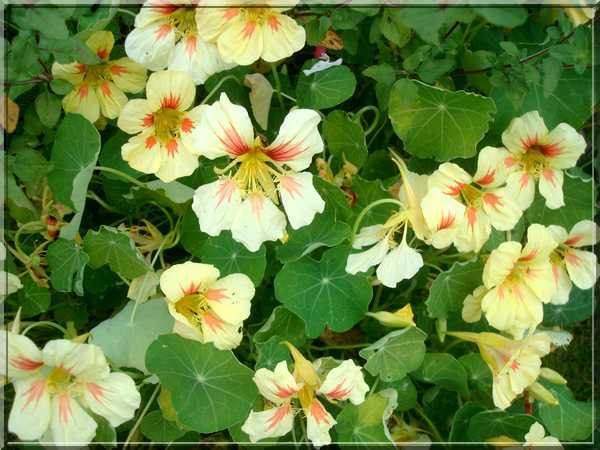 Le jardin des couleurs Dsc03031