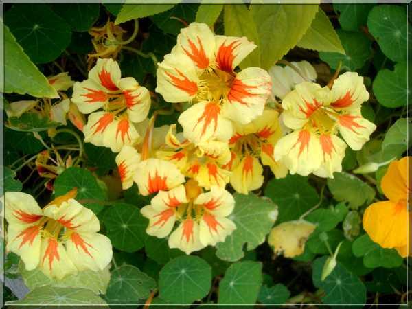 Le jardin des couleurs Dsc03032