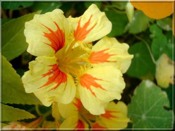 Le jardin des couleurs Dsc03033