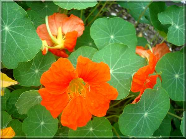 Le jardin des couleurs Dsc03034