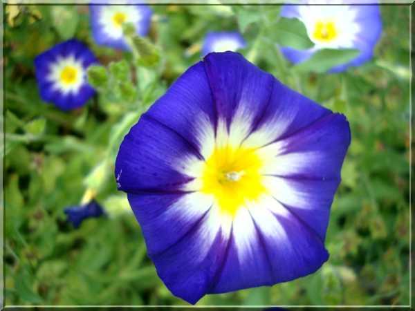 Le jardin des couleurs Dsc03035