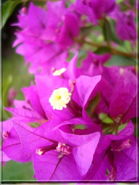 Le jardin des couleurs Dsc03037