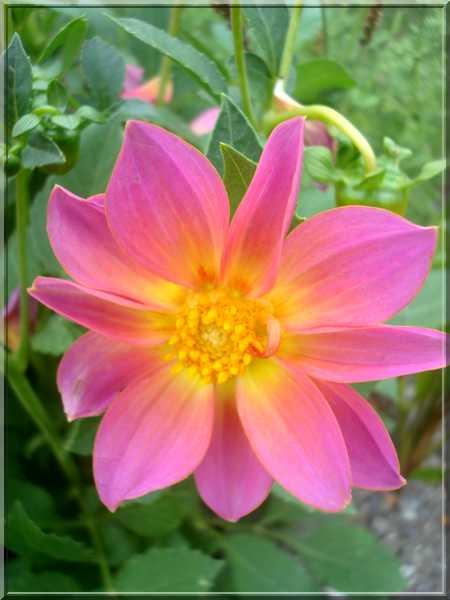 Le jardin des couleurs Dsc03038