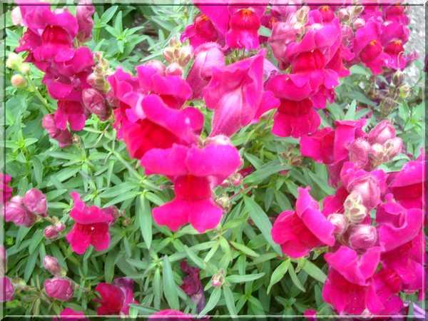 Le jardin des couleurs Dsc03039