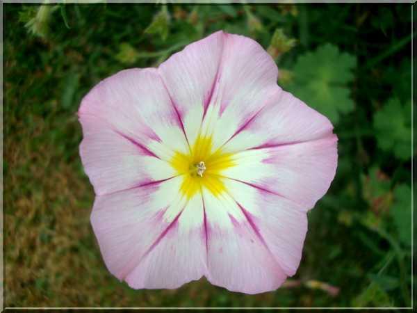 Le jardin des couleurs Dsc03040