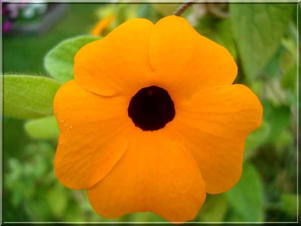 Le jardin des couleurs Dsc03043