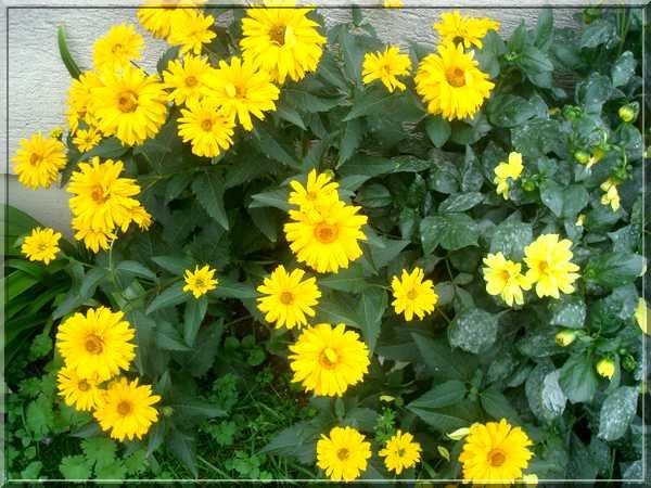Le jardin des couleurs Dsc03044
