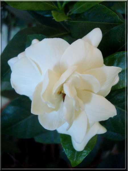 Une plante fleurie pas compliquée Dsc03046