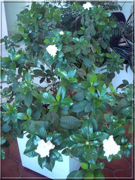 Une plante fleurie pas compliquée Dsc03047