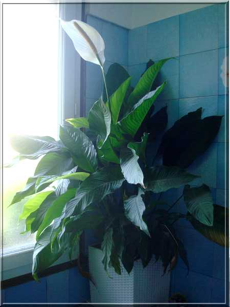 Dans la salle de bain Dsc03048