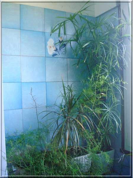 Dans la salle de bain Dsc03050