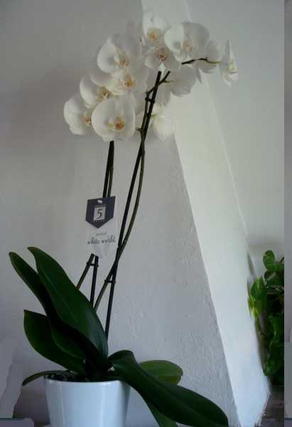 Des nouvelles de mes orchidées... Dsc04063