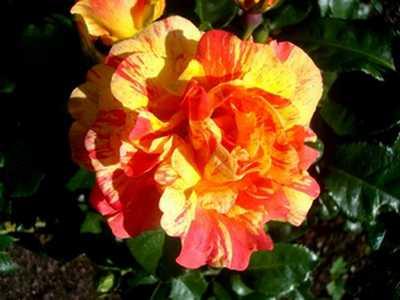 Le jardin embaume.  Dsc04579