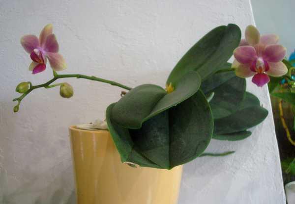Floraison de cet hiver Dsc05342