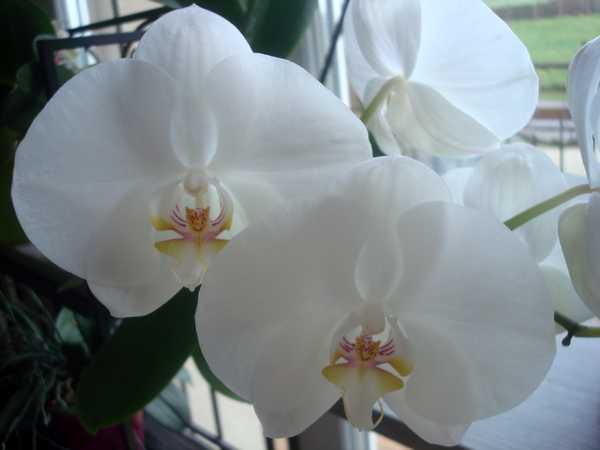 Floraison de cet hiver Dsc05343