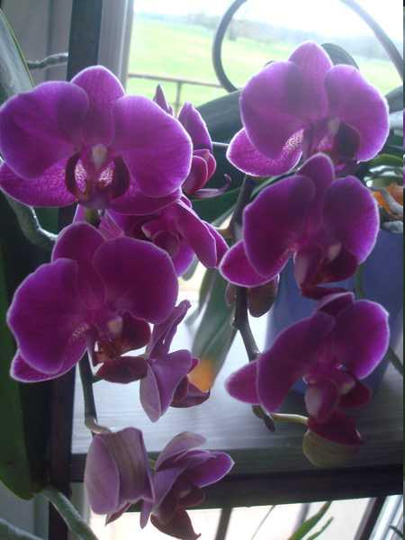 Floraison de cet hiver Dsc05344