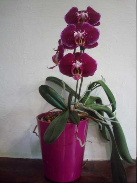 Floraison de cet hiver Dsc05345