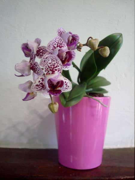 Floraison de cet hiver Dsc05346