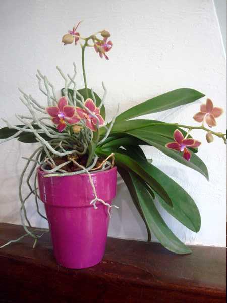 Floraison de cet hiver Dsc05347