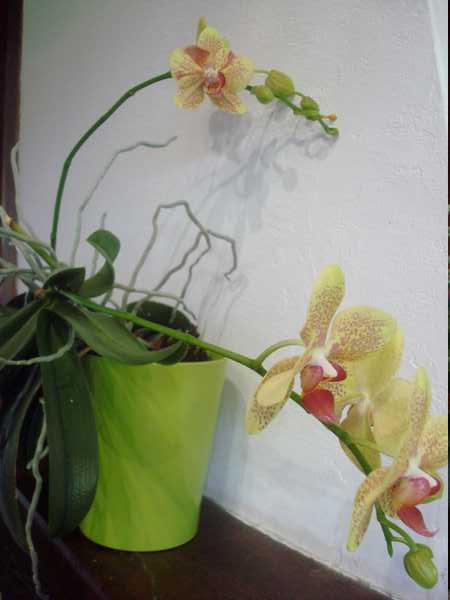 Floraison de cet hiver Dsc05348