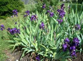 Des fleurs à l'honneur Dsc05725
