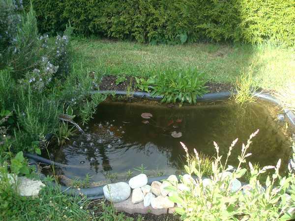 Les bassins Dsc05729