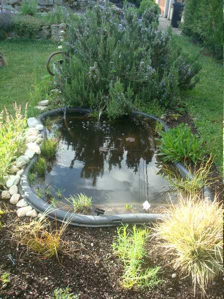Les bassins Dsc05730